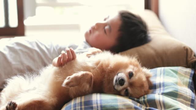 家で一緒に寝ている男の子と犬 - ペット点の映像素材/bロール