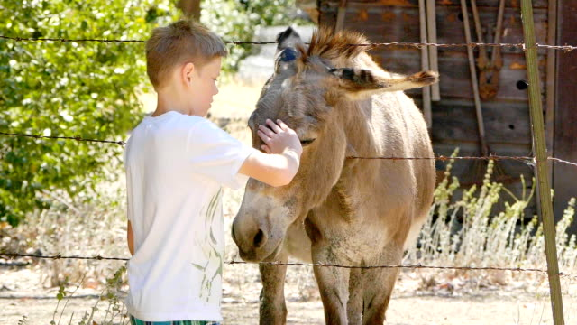 boy and donkey - rural scene stock videos & royalty-free footage