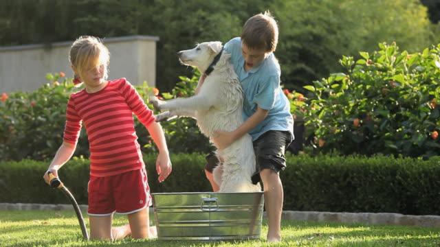 ms pan boy (8-9) and girl (10-11) dragging white shepherd puppy into washtub on lawn / richmond, virginia, usa - washtub stock videos and b-roll footage