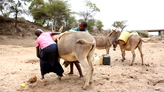 boy and girl loading donkey with water gallons on august 02, 2011 in road from garisa to dadaab, kenya - アフリカの角点の映像素材/bロール