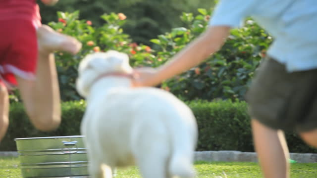 ms selective focus boy (8-9) and girl (10-11) running with white shepherd puppy towards washtub on lawn / richmond, virginia, usa - washtub stock videos and b-roll footage