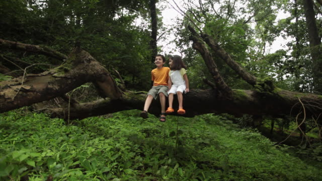 boy and girl sitting on a fallen tree in a forest, malshej ghat, maharashtra, india - brother stock videos & royalty-free footage