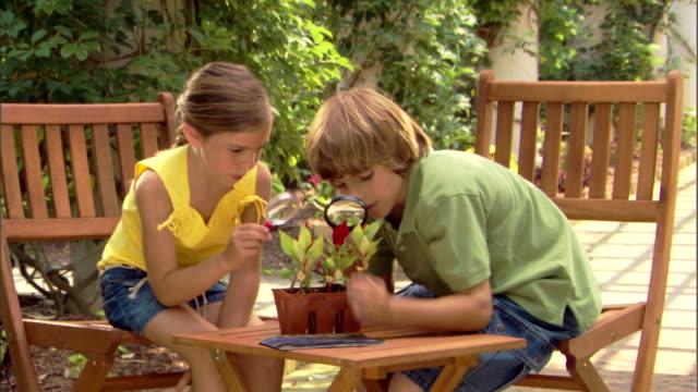 vídeos y material grabado en eventos de stock de a boy and girl study plants with magnifying glasses. - encuadre de tres cuartos