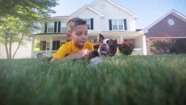 boy and his boston terrier dog - lush video stock e b–roll