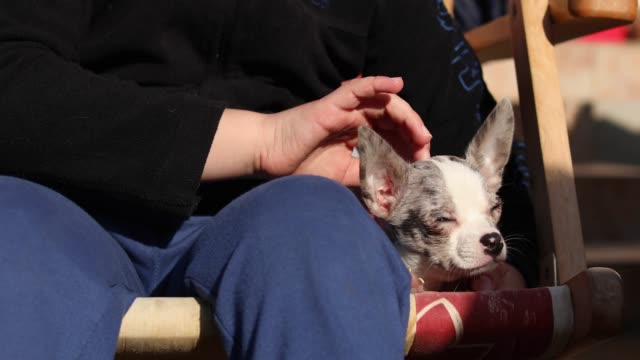 boy and his chihuahua dog sitting on a chair - dog blinking stock videos & royalty-free footage