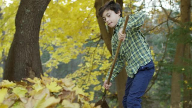vídeos de stock e filmes b-roll de a boy and his dog - ancinho equipamento de jardinagem