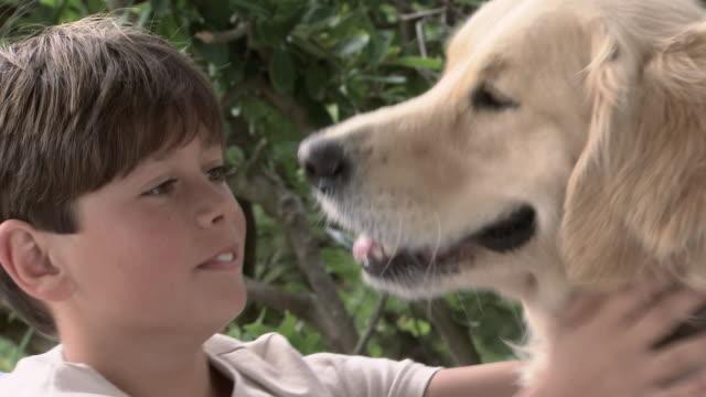 boy and pet golden retriever - golden retriever stock videos & royalty-free footage