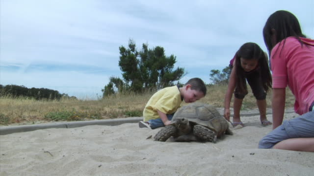 vidéos et rushes de ms, boy (2-3) and two girls (6-7) observing  tortoise  in sand pit, richmond, california, usa - 2 kid in a sandbox