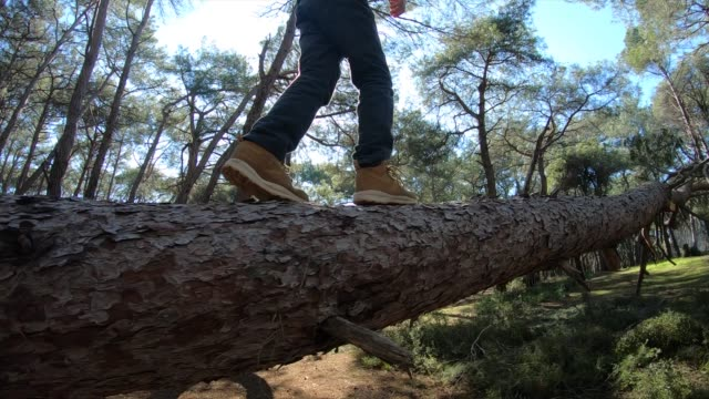 vídeos de stock e filmes b-roll de boy balancing on fallen tree to cross stream in forest - arvore