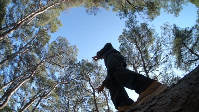 junge balancieren auf gefalleneren baum, um bach in wald zu überqueren - gleichgewicht stock-videos und b-roll-filmmaterial
