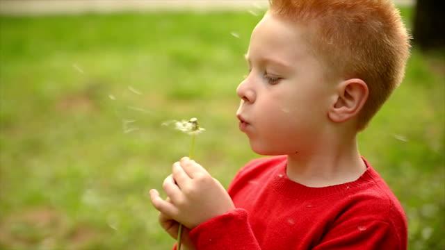 Boy blowing dandelion seed. Slow motion.