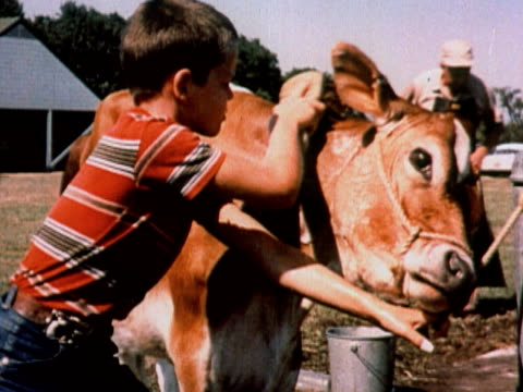 1960 montage cu boy cleaning cow with brush / ms man awarding blue ribbon to cow, woman hugging cow / usa - agricultural fair stock videos and b-roll footage