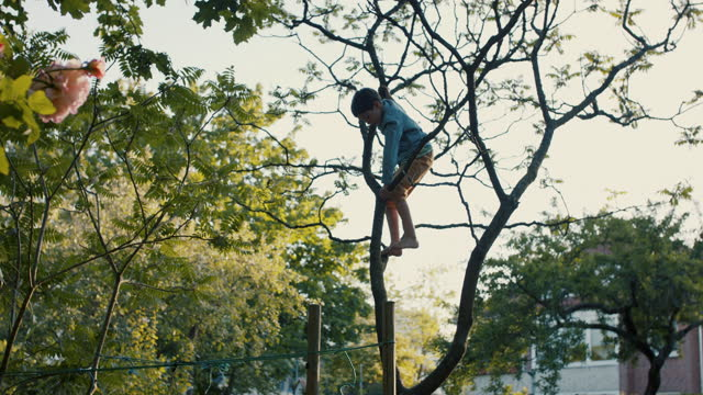 boy climbing tree in grandparent's back yard - mut stock-videos und b-roll-filmmaterial