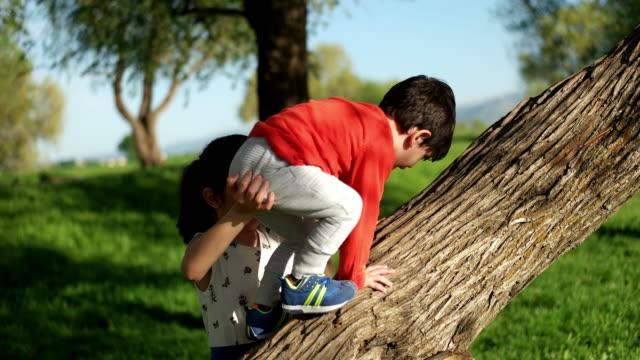 vídeos y material grabado en eventos de stock de árbol de escalada chico - conservacionista