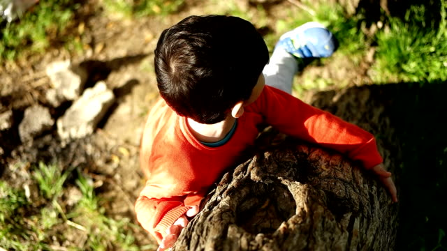 boy climbing tree - hugging tree stock videos & royalty-free footage