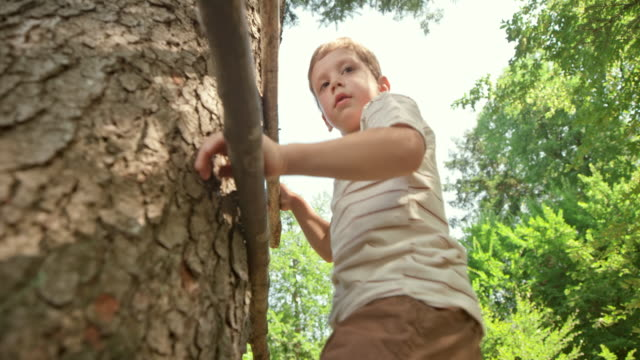 ts boy climbing up and down a tree in the forest on a nice summer day - primary age child stock videos & royalty-free footage