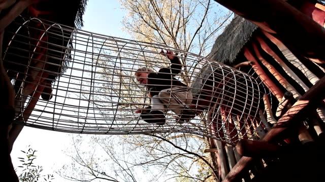 vídeos de stock, filmes e b-roll de hd: menino agachamento em uma academia de selva - treehouse