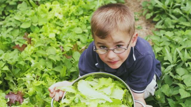 CU HA Boy crouching holding colander with lettuce in vegetable garden, Sunderland, Vermont, USA