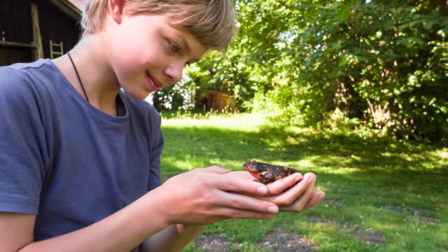 cu boy discovering frog in garden - nur jungen stock-videos und b-roll-filmmaterial