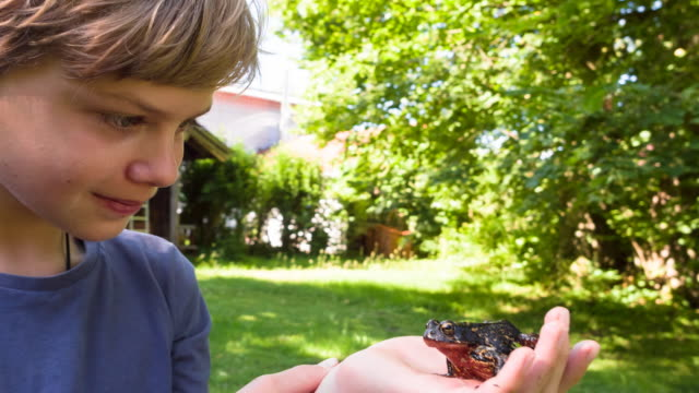 cu boy discovering frog in garden - curiosity stock videos & royalty-free footage