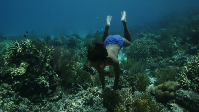 boy dives and touches seafloor reef, indonesia - tropical fish stock videos & royalty-free footage