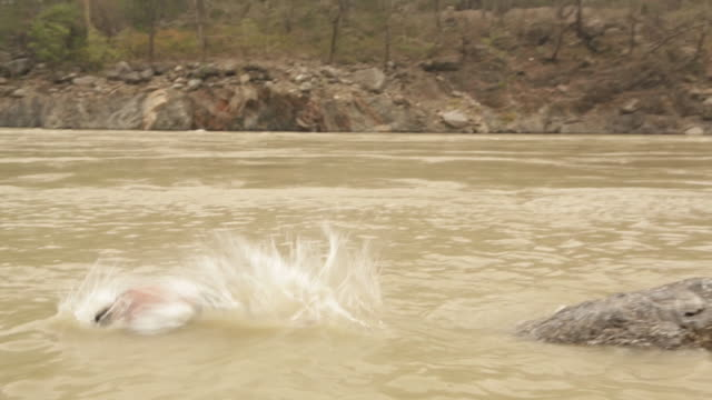 stockvideo's en b-roll-footage met boy diving and swimming in river, ganges river, rishikesh, uttarakhand, india - handen op de heupen