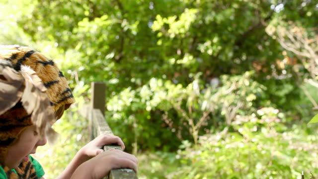 stockvideo's en b-roll-footage met boy dressed up as tiger leaning on wooden fence - alleen jongens