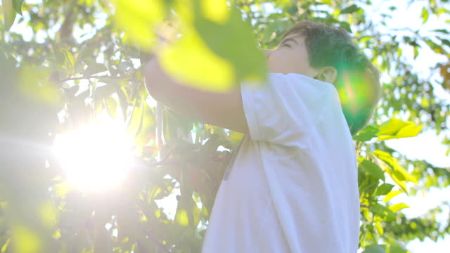 boy eats cherries at sunset - boys stock videos & royalty-free footage