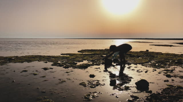 boy exploring the beach during sunset - fishing net stock videos & royalty-free footage