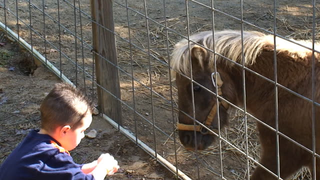 stockvideo's en b-roll-footage met boy feeding a pony - dierentuin