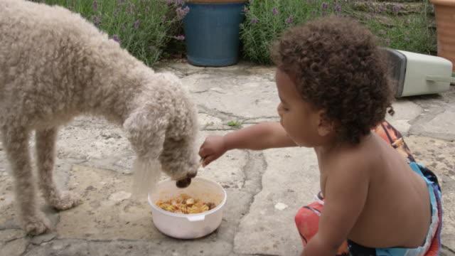 vídeos de stock, filmes e b-roll de boy feeding dog - 18 23 months