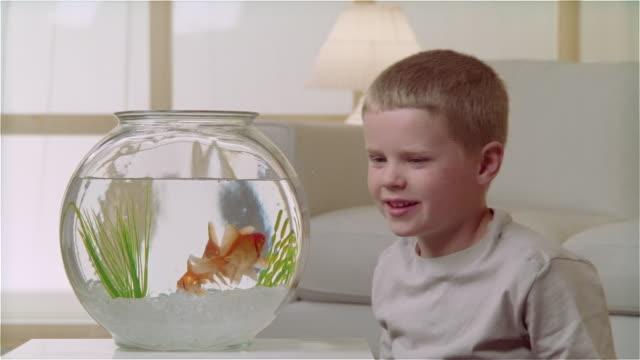 cu boy feeding goldfish in bowl - pets stock videos & royalty-free footage