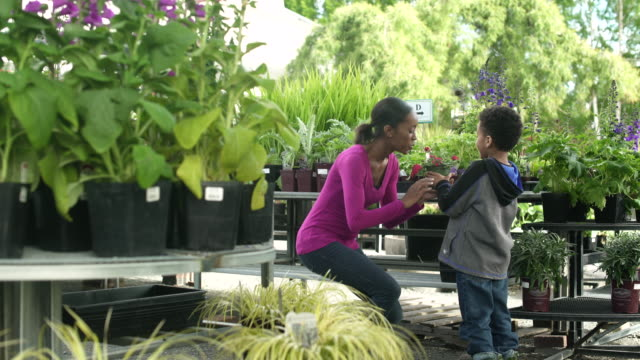 Boy giving a flower pot to young woman in a greenhouse