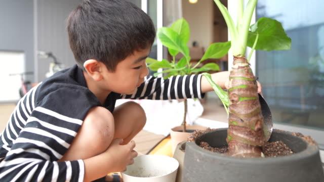 a boy growing a foliage plant - ガーデニング点の映像素材/bロール