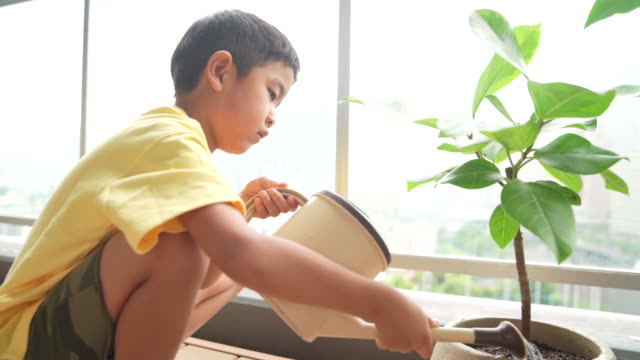 a boy growing a foliage plant - children only stock videos & royalty-free footage