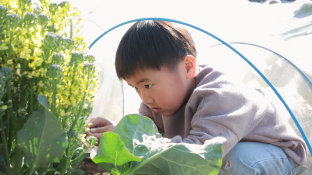 boy harvesting vegetables in the field - environmental issues video stock e b–roll