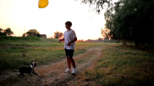 boy, his dog and balloon - competition round stock videos and b-roll footage