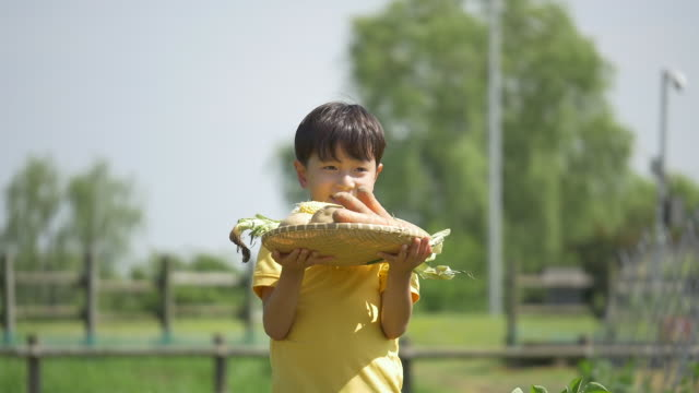 a boy holding a basket filled with vegetables - nur kinder stock-videos und b-roll-filmmaterial