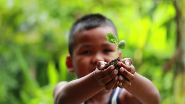 vídeos de stock, filmes e b-roll de garoto segurando uma pequena planta verde, câmera lenta - segurar