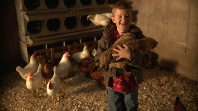 ms boy (10-11) holding chicken and smiling / wilmington, illinois, usa  - 鶏小屋点の映像素材/bロール