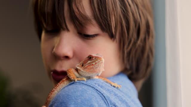 ペットのトカゲを手に持ち、肩に乗せる少年 - 捕らえられた動物点の映像素材/bロール