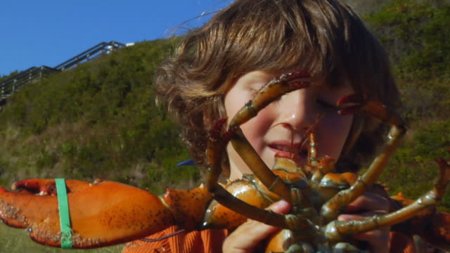 cu, zo, zi, boy (4-5) holding lobster, portrait, north truro, massachusetts, usa - lobster stock videos & royalty-free footage