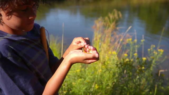 vidéos et rushes de cu, zi, boy (10-11) holding salamander by lake, bovina, new york state, usa - 40 44 ans