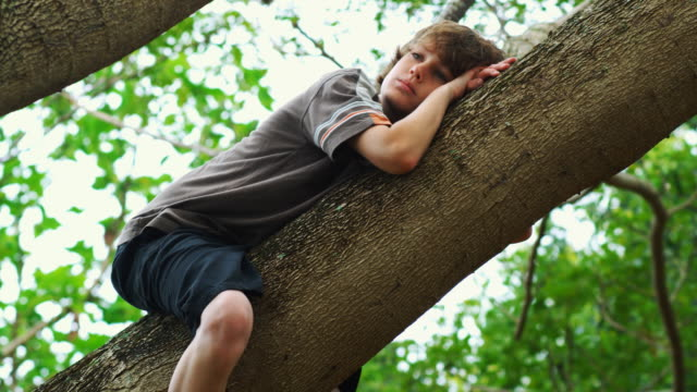 boy in a tree - one teenage boy only stock videos & royalty-free footage