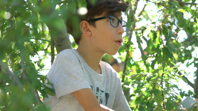 boy in an plum tree - turks fruit stock videos and b-roll footage