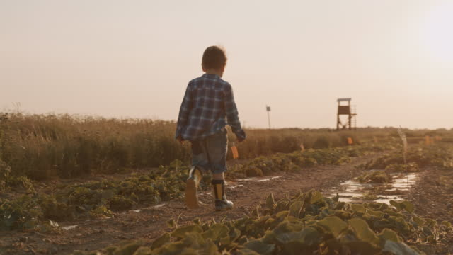 slo mo a boy in boots walks in the middle of a field at sunset - one boy only stock videos & royalty-free footage