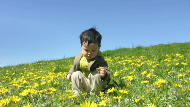 boy in flowers (hd) - one baby boy only stock videos & royalty-free footage