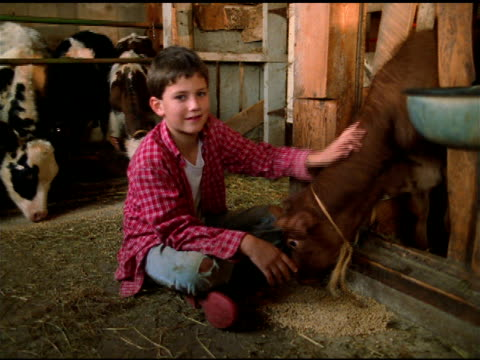 boy in red checked shirt sits cross legged beside feeding calf in barn, vermont - cross legged stock videos & royalty-free footage