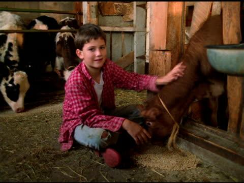 vídeos y material grabado en eventos de stock de boy in red checked shirt sits cross legged beside feeding calf in barn, vermont - cross legged