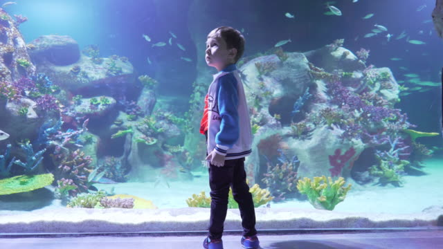 a boy in the aquarium center - mariner lebensraum stock-videos und b-roll-filmmaterial